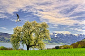 Landscape in front of the alps — Stock Photo