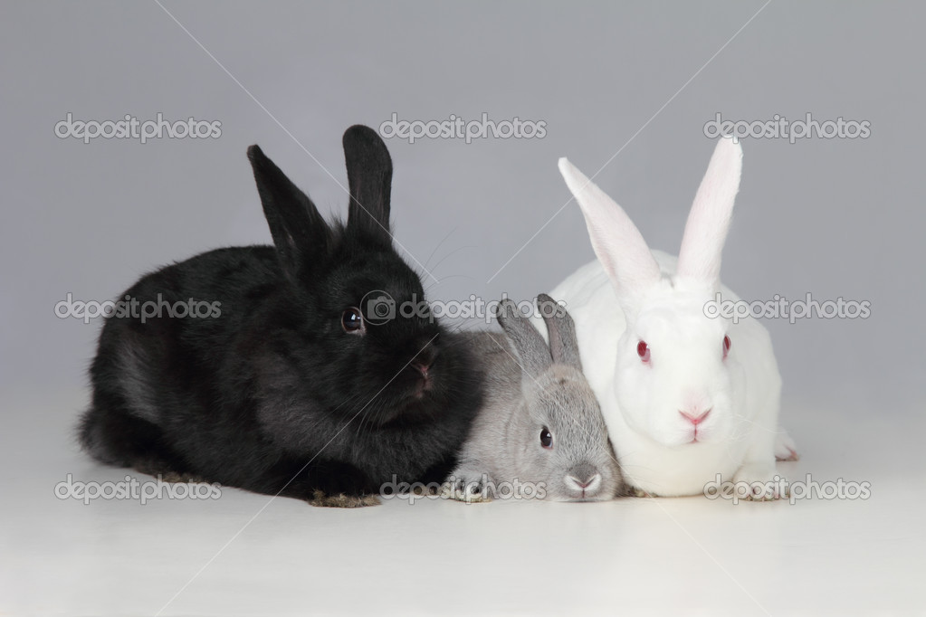 A biracial bunny rabit is loved by his parents  Stock Photo #9836790