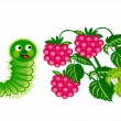 Caterpillar with raspberry — Stock Vector