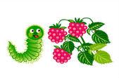 Caterpillar con lampone — Vettoriale Stock