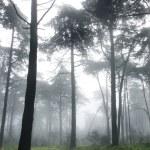 photo verticale de pins dans une forêt de brouillard — Photo #9644607