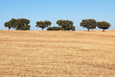 Träd i alentejo-regionen, portugal. — Stockfoto