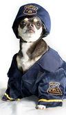 Police Dog — Stock Photo