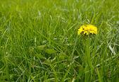 Yellow spring flower — Stock Photo