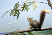 Squirrel Up High — Stock Photo