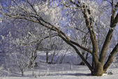 Winter frosty trees — Stock Photo