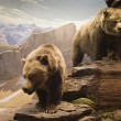 ������, ������: Grizzly Bears
