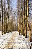 Auf der winterwanderung — Stockfoto