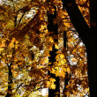 The autumn collection of colors — Stock Photo #9876991