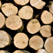 Beech trunk is cut into firewood — Stock Photo
