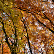 Stock Photo: The autumn collection of colors