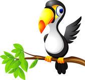 Toucan bird cartoon — Stock Vector