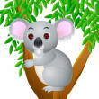 Koala Cartoon — Stock Vector