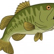 Bass Fish - Stock Vector