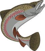 Rainbow Trout — Stock Vector