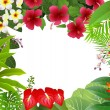 Stock Vector: Tropical plant background
