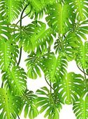 Tropical leaf bakgrund — Stockvektor