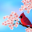Red bird sitting on cherry tree blossom — Stock Vector