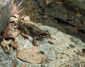 Frog 1 — Stock Photo