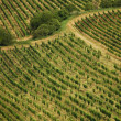 Three ways in summer vineyards — Stock Photo #9614711