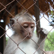 Monkey in a cage — Stockfoto
