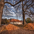 Stock Photo: Autumn linden near old building