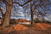 Autumn linden near old building — Stock fotografie
