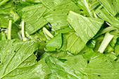 Chinese cabbage washing for food preparation — Stock Photo