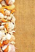 Seashell frame on sack — Stock Photo
