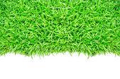 Grass frame — Stock Photo