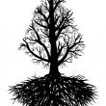 Tree root vector — Stock Vector