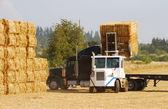 Grass Hay — Stock Photo