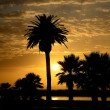 Stock Photo: Palm Sunset