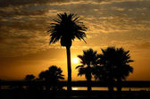Palm Sunset — Stock Photo