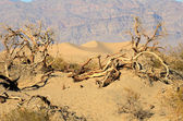 Dunes de mesquite — Photo