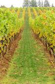 Herbst trauben — Stockfoto