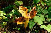 Bordo de outono — Fotografia Stock