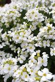 Vacker blomma trädgård — Stockfoto
