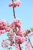 Prachtige boom blossoms — Stockfoto