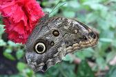 A beautiful butterfly — Stock Photo