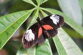 Una hermosa mariposa — Foto de Stock