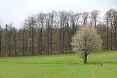 Güzel bir ağaç bahar — Stok fotoğraf