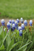 Flowers blooming in spring — Stock Photo