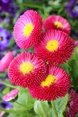 Hermosas flores en el jardín — Foto de Stock