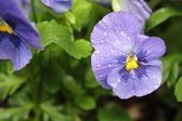 Våt blomma — Stockfoto