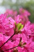 Wet flower — Stock Photo