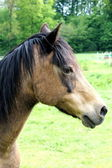 A horse — Stock Photo
