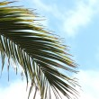 Palm — Stock Photo #10675720