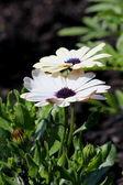 Beautiful flowers — Stock Photo