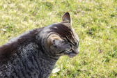 A nice cat in the garden — Stock Photo
